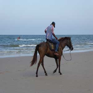 Horse on Hua Hin beach